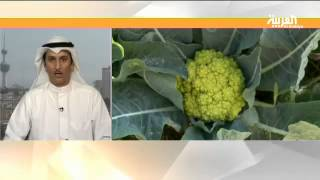 فيديو..طماطم سوداء وفراولة بيضاء تنمو في صحراء الكويت