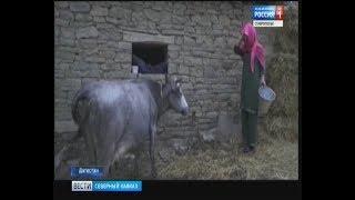 Дагестанские девушки вернулись в прошлое