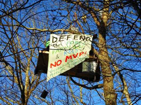 Tree-Sitting to Stop the Mountain Valley Pipeline + words on Ruchell Cinque Magee