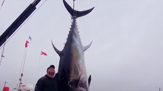 WORLD'S BIGGEST TUNAS AT PEI Part 2 - YouFishTV Canada