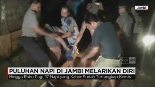 Video Lapas Jebol Diterjang Banjir, Puluhan Napi Kelas II A Jambi Kabur download MP3, 3GP, MP4, WEBM, AVI, FLV Agustus 2018