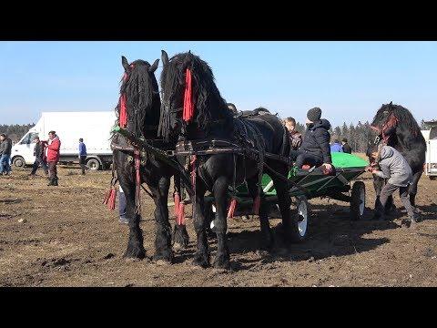 Targul de cai de la Solca Bucovina 3 Martie 2019 Nou !!!