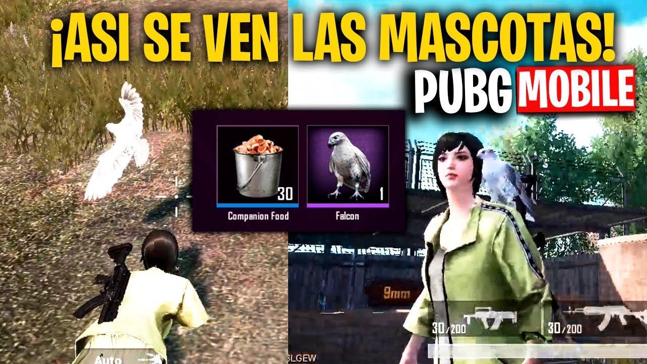 Asi Se Ven Las Mascotas En Pubg Mobile Actualizacion 0 12 Mattsinlife Youtube
