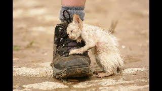 Котята из промзоны просят о помощи!