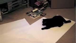 Последния съемка кота Матиса