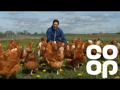 Co-op Food | Meet the Producer - Free Range Eggs
