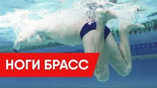НОГИ БРАСС! КАК ДЕЛАТЬ ПРАВИЛЬНЫЙ УДАР НОГАМИ БРАССОМ? @Swimmate.ru