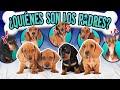 CONFESANDO LA HISTORIA DE LOS CACHORROS | LOS POLINESIOS VLOGS