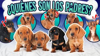 CONFESSING THE STORY BEHIND THE PUPS | LOS POLINESIOS VLOGS