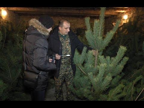 mistotvpoltava: Лісники – підсумки ялинкової кампанії 2018