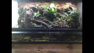 Fire Bellied Toad Bioactive Paludarium Build