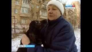 В Красноярском крае продают некачественные корма и лекарства для животных