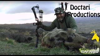 bow hunting pigs nz