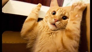 FUNNY CATS SCARED OF RANDOM THINGS | Scaredy Cats | Startled Cats | Epic Scared Cat Compilation