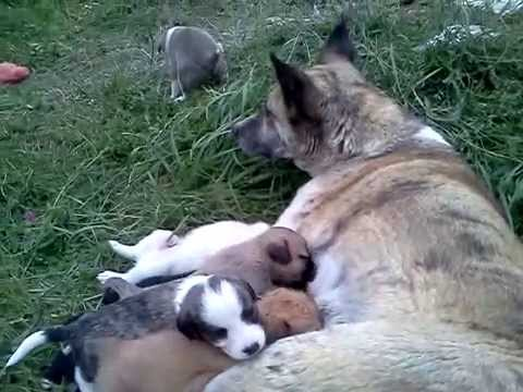 Собака со своими щенками