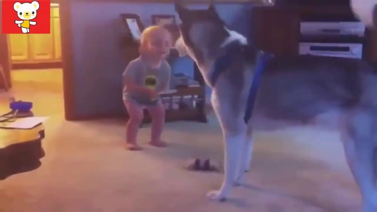 Приколы дети и животные видео 2018