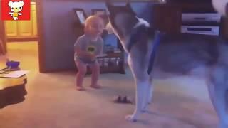 Смешные видео про детей и животных
