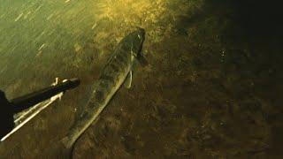 подводная охота на судака маныч веселовское водохранилище