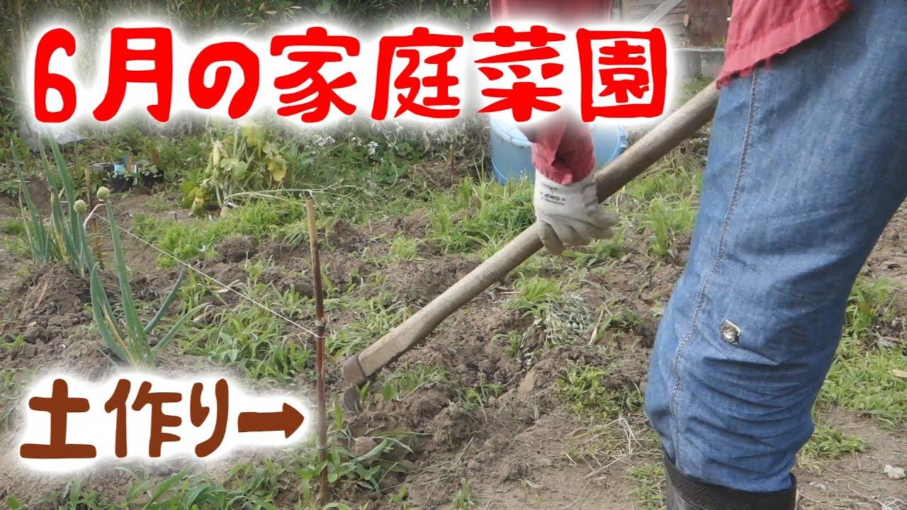 【家庭菜園】2020年5月下旬~6月 畑 初心者 土作り じゃがいも オクラ ナス プランター