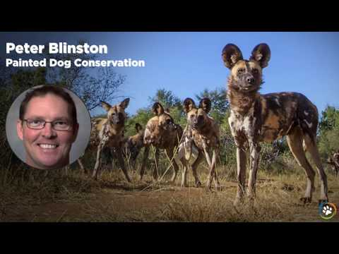 WCN Fall Expo 2017 - Painted Dog Conservation- Peter Blinston