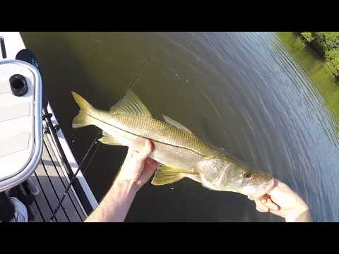 Tampa Bay Fishing Trip (Catching Snook On The Paddleboard)