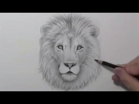 تعليم رسم الاسد باقلام رصاص في اقل من ثلات دقائق Youtube