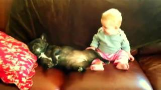 Repeat youtube video Baby Laughs at Snoring Dog
