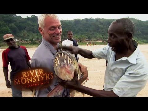 Catching A PRIZED Goliath Tigerfish | TIGERFISH | River Monsters