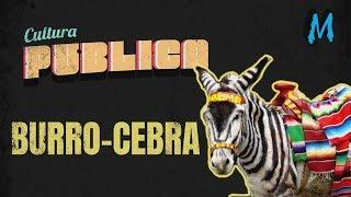 Cultura Publica: La Historia del Burro-Cebra en Tijuana
