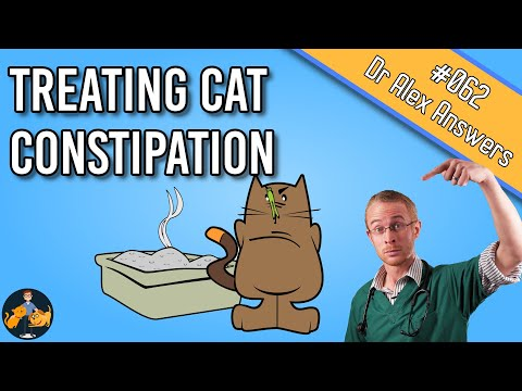 Cat Constipation: Home Remedy, Treatment And Prevention - Cat Health Vet Advice