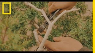 The Art of Shaping a Bonsai Tree