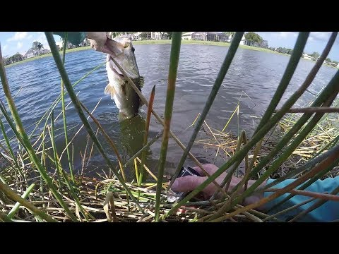 Swamp A** for Mondo Bass in Thick Grass