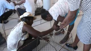 See How Pens For Hens Helps Families In Haiti
