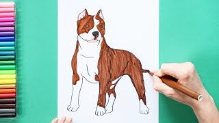 How to draw and color a Pitbull - how to make dogs series
