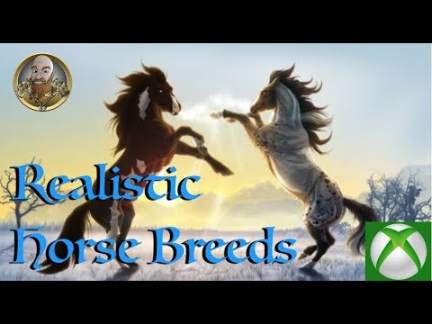 realistic horse breeds # 22