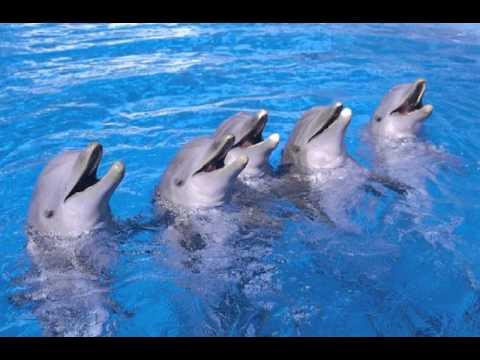 Los increíbles delfines - YouTube