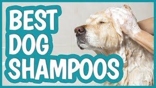 Best Dog Shampoo in 2019 | TOP 10 Dog Shampoos