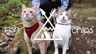 Fish & Chips The Adventure Cats // In A Minute (Where You Live)