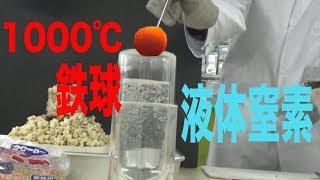 1000℃の鉄球vs液体窒素/ 米村でんじろう[公式]/science experiments【実験】