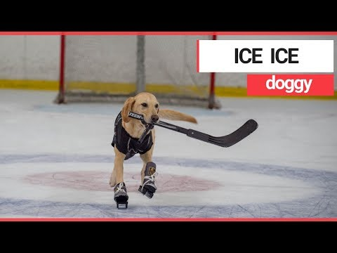 Matt Provo - The World's First Ice-Skating Dog