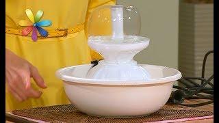 Как отучить кота пить воду из вашей чашки – Все буде добре. Выпуск 1128 от 23.11.17