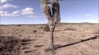 Drone Texas Yucca