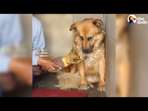 Dog Once Afraid To Be Touched Can't Stop Giving Kisses | The Dodo