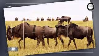 Отличие 4К видео от FullHD видео Пояснения Подсказки Видеомонтаж