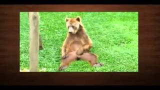 Самые смешные ролики про животных 9