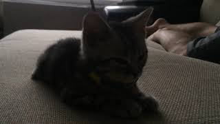Новый член семьи - котенок Бильбо