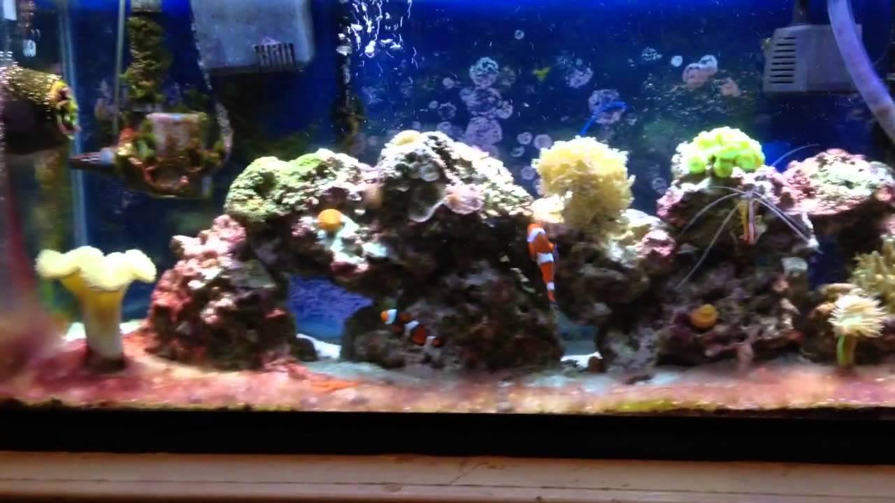 Cyanobacteria Reef Tank