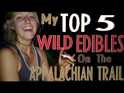 My Top 5 Favorite Wild Edibles on the Appalachian Trail