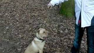 My Sharpei Attack Slow Motion