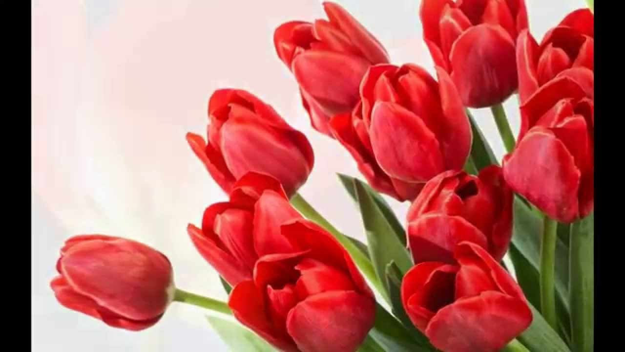 New 2015 hd tulips all species wallpapers youtube new 2015 hd tulips all species wallpapers thecheapjerseys Choice Image